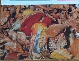 Petit Calendrier De Poche  1991  Champignon Bolet à Pied Rouge  Pharmacie Caen - Klein Formaat: 1991-00