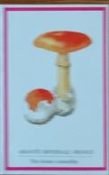 Petit Calendrier De Poche  1996  Champignon Amanite Imperiale Oronge Pharmacie Le Mans - Klein Formaat: 1991-00