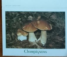Petit Calendrier De Poche  2001  Champignon Cèpe De Bordeaux   Pharmacie Chemillé - Klein Formaat: 2001-...
