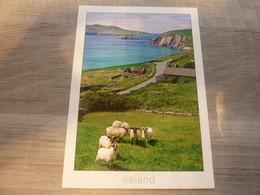 THE BEATIFUL DINGLE PENINSULA AT SLEA HEAD  - EDITIONS LIAM BLAKE - - Dublin