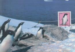 Carte  Maximum  1er  Jour   T.A.A.F   Manchot  Adélie   2005 - Pinguine