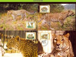 Ngb360mb WWF FAUNA WILDE KAT ROOFKAT KAUKASUS LEOPARD WILD CAT KATZEN GROßKATZEN FELINS AZERBAYCAN 2005 MAX # - Tarjetas – Máxima