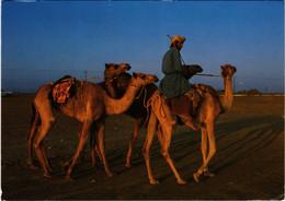 PC CPA SULTANATE OF OMAN, CAMEL RIDER, REAL PHOTO POSTCARD (b16345) - Oman