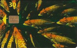 Danmark: Tele Danmark - Fish - Dänemark