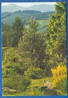 Deutschland; Schwarzwald; Moosmättle Bei Schramberg - Sin Clasificación