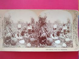 PHOTO STÉRÉO - Ramassage De Citrouilles Pour Halloween - Enfants - USA - 1902 - BE - Fotos Estereoscópicas