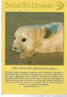 England & Circulated, Grey Seal Pup, Halichoerus Grypus, J. Arthur Dixon, Gairloch To Edimburg 1984 (25579) - United Kingdom