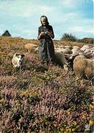 Animaux - Moutons - Limousin - Bergère Et Son Troupeau - CPM - Voir Scans Recto-Verso - Other