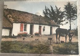 85 Pays Maraichin 1973 Dans Le Marais  Bourrine Ane Cannetons Jonquilles - Altri Comuni