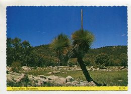 AUSTRALIA - AK 353427 Australian Grasstree - Other