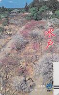 TC Ancienne JAPON / NTT 250-052 - Paysage Forêt / TBE - Landscape Forest JAPAN Front Bar Phonecard - Balken TK - Japon