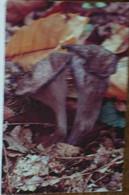 Petit Calendrier De Poche 1992 Champignon Trompette De La Mort Pharmacie Le Teilleul Manche - Klein Formaat: 1991-00