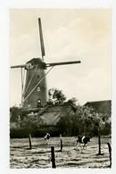 D532 - Ulvenhout - Molen - Moulin - Mill - Mühle - - Other