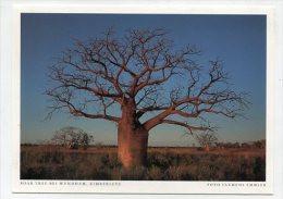 AUSTRALIA - AK 191672 Kimberleys - Boab Tree Bei Wyndham - Otros