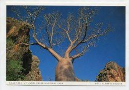AUSTRALIA - AK 191715 Boab Tree Im Tunnel Creek National Park - Otros