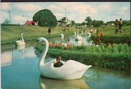 Argentina - Carte Postale - Circa 1960 - Mar Del Plata - Parque Camet - Lago - Non Circulé - A1RR2 - Argentina