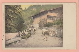 SUISSE - Vaches Sur Le Chemin - Abreuvoir - Chalets - Carte Colorisée - PRECURSEUR - Autres