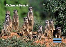 Botswana Kalahari Desert Meerkats New Postcard - Botswana
