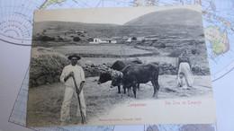 Spain / Espagne : Campesinos  Sta Cruz De Tenerife  -Mson Alexandre édit. - Tenerife