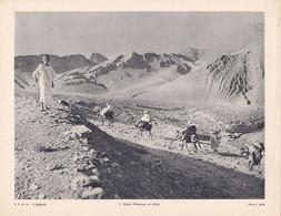 Chromo : Image Pédagogique : Algérie : Hauts Plateaux Et Atlas : 27cm X 21cm : - Cromo