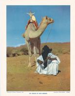 Chromo : Image Pédagogique : Algérie : Dans Le HOGGAR : Un Targui Et Son Méhari : 27cm X 21cm : - Cromo
