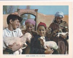Chromo : Image Pédagogique : Algérie : Jeunes Algériens Avec Un Berger  : Agneaux : Métier - Agriculture : 27cm X 21cm : - Cromo