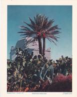 Chromo : Image Pédagogique : Maroc : Végétation Marocaine  : 27cm X 21cm : - Cromo