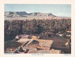 Chromo : Image Pédagogique : Maroc : Un Oasis Dans Le Sud : 27cm X 21cm : - Cromo