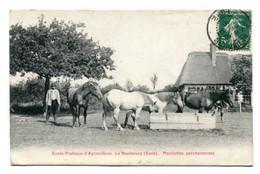 27 - LE NEUBOURG - Ecole Pratique D' Agriculture - Pouliches Percheronnes - Le Neubourg