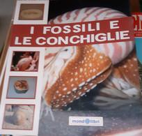 I Fossili E Le Conchiglie - Libri, Riviste, Fumetti