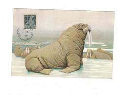 Canada Yvert N°273 Sur Carte Postale. MORSE. - Otros