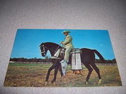 """1960s """"EBONY WILD WOOD"""" FAMOUS HORSE, JAMES O. HICKS, PHOENIX AZ. POSTCARD - Paarden"""