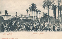 LAS PALMAS - N° 6 - PLATANOS Y PALMAS - La Palma