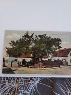 Carte Postale De  WORMS  A.rh LUTHERBAUM - Postkaarten