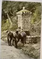 Corse Theme Ane Route De Piana à Porto Le Fontaine - Zonder Classificatie