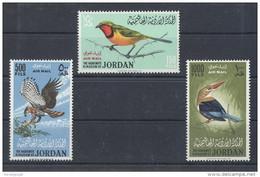 Jordan - 1964 Birds MNH__(TH-1766) - Jordan