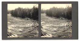 Stereo-Fotografie Baumstämme In Fluss, Forstwirtschaft - Professions