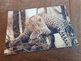 LEOPARD - NAMIBIA - 1993 - Namibia