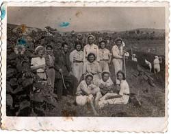 Photo Originale Paysans Bulgare à La Culture Du Tournesol Vers 1930/40 - Ouvrières & Ouvriers Agricoles - Professions