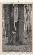 27 Le Landin.  Le Chêne  à La Cuve - Other Municipalities
