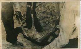 14575 -1946 POST MORTEM  - AUTRICHIENS TRANSPORT DES CORPS - A LA LIBERATION REQUISITION DES  MAUTHAUSEN CAMP DE LA MORT - War 1939-45