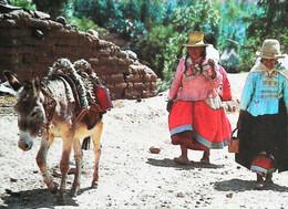 ►◄   ANE  Donkey  Perou Peru   CPSM - Peru