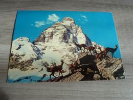 VALLEE D'AOSTE - MONT CERVINO - EDITIONS BRUNNER - - Aosta