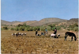 Afrique - Burkina Faso - Dori - Scène Pastorale Autour D'un Point D'eau - âne - Burkina Faso