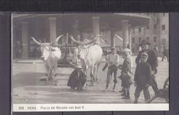ITALIE SIENA PIAZZA DEL MERCATO CON BUOI II - Siena