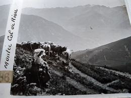 St Sauveur (65) - Paysanne Vachère Et Son Troupeau - - Plaque De Verre Stéréoscopique 6 X 13 - BE - Fotos Estereoscópicas