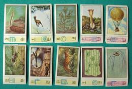 10 Images Collection NESTLE Et KOHLER Les Merveilles Du Monde Album N° 5  Séries 106 à 117 - Schokolade