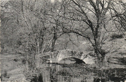 Signes  Le Pont Du Gapeau     Var - Autres Communes