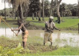 SENEGAL PREPARATION DES RIZIERES (ANA4) - Senegal