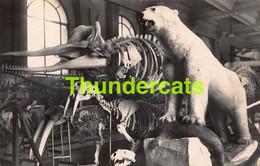 CPA CARTE DE PHOTO MONACO MUSEE OCEANOGRAPHIQUE CACHALOT ET OURS BLANC POLAR BEAR HUNT CHASSE - Oceanographic Museum